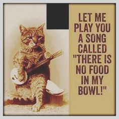 Our ginger and white tomcat William seems to have this song stuck in his mind most days