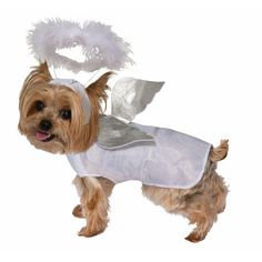 Angel Dog Costume small,White/Silver: The Pet costume is great way to show the world your dog/cat has the Halloween spirit. This pet costume comes as is shown in the picture. Best Dog Costumes, Pet Costumes For Dogs, Angel Halloween Costumes, Cat Costumes, Dog Halloween, Animal Costumes, Costume Ideas, Dog Lion Mane, Pet Dogs