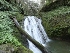 3 Fabulous Waterfall Hikes on Mt. Tamalpais