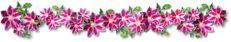 Decent Image Scraps: Flower Border