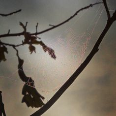 Captured an amazing spider web one morning with dew on it