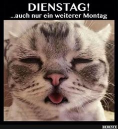 Dienstag!... auch nur ein weiterer Montag..