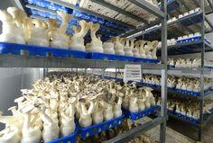 현대적인 버섯생산기지 평양버섯공장 (2)-《조선의 오늘》