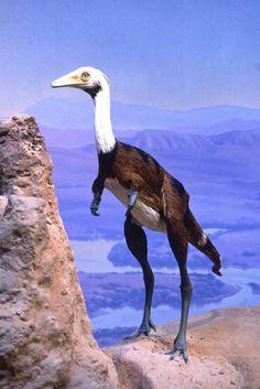 "mononykus | Mononykus olecranus, life size, 36"" long, real feathers | cute"