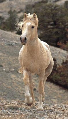 Trotting horse
