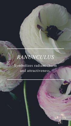Flower Symbol, Ranunculus, Symbols, Flowers, Persian Buttercup, Royal Icing Flowers, Flower, Florals, Glyphs