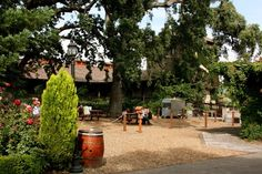 Love having a picnic among V. Sattui's 250 year old Heritage oak trees... among the oldest oaks in the Napa valley. A beautiful place to have lunch in the valley!