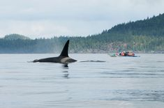 10 Summer Trips That Will Change Your Life (Kayak with Orcas in British Columbia)