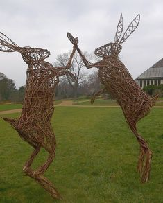 Willow Hares high fivin,  at the Royal Hordicultural Siciety's Garden Harlow Carr.   privetandconfidential.blogspot.com
