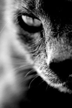 Gorgeous angle on this cat photo. Katze in schwarz\/weiß #cat #monochrome