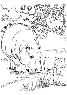 Coloriage hippopotames pour adulte anti-stress