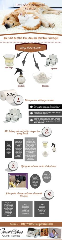 How to Get Rid of #Pet Urine Stains and other #Odor from Carpet -  Steps to clean your #carpet from pet odor and other stains shared in this infographic image.