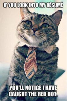 Cat Résumé. #Imgur