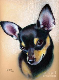 Dog Portraits Drawing - Taz by Bob Botha