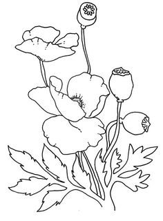 Poppy, : Lovely Poppy Drawing Coloring Page Poppy, : Lovely Poppy Drawing Coloring Page Poppy Coloring Page, Flower Coloring Pages, Colouring Pages, Mandala Coloring, Coloring Sheets, Adult Coloring, Coloring Books, Fabric Painting, Painting & Drawing