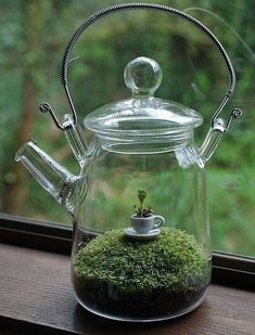 Sweet idea for a DIY terrarium - tea cup in a tea pot with moss