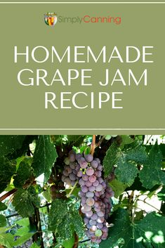 Grape Jam Recipe: both low sugar and full sugar versions of this delightful treat are included. Triple A Recipe, Homemade Grape Jelly, Backyard Sports, Sugared Grapes, Grape Jam, Water Bath Canning, Breakfast For A Crowd, Canning Lids, Food Mills