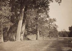 Fontainebleau gustave le gray, le pavé de chailly vers 1853
