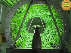 Omega garden