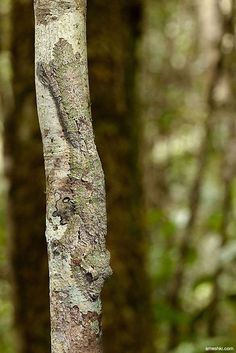 FIND THE LIZARD! ~ 4 Awesome Camouflaged Animals - 9 Wows