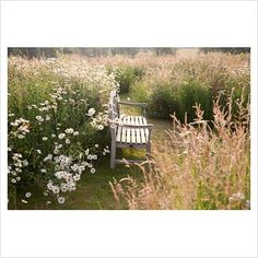 GAP Photos - Garden & Plant Picture Library - Wooden bench in wildflower meadow with grasses and ox-eye daisies. Follers Manor, Sussex. Designed by: Ian Kitson - GAP Photos - Specialising in horticultural photography