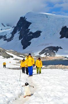 Cuverville Island Antarctica.