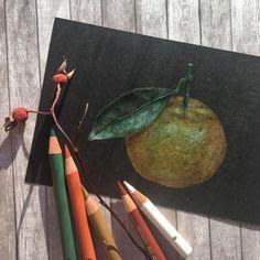 Иллюстрация цветными карандашами на черной бумаге Colored pencils illustration on black paper ботаническая иллюстрация Botanical illustration