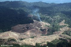 Palm oil's climate impact worse than thought due to methane emissions