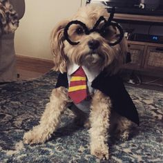 You dressed up your dogs, costumed your cats, and prepared your bunnies for some kung fu fighting. Click through the cutest pets winning Halloween!