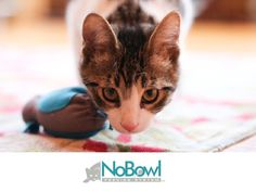 Revolutionary veterinarian-designed product for cats. The NoBowl Feeding System enables cats to fulfill their natural hunting instinct.