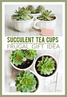 ideas for small succulent garden diy tea cups Small Succulents, Planting Succulents, Succulent Plants, Succulent Arrangements, Easy Gifts, Homemade Gifts, Fun Gifts, Unique Gifts, Work Gifts