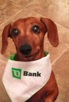 """""""You mean TD Bank has dog treats, just for me?"""""""
