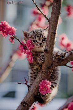 Cat kitten love tree blossoms gorgeous