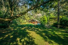 606 Darkwood Rd, Bellingen, NSW View property details and sold price of 606 Darkwood Rd & other properties in Bellingen, NSW Investment Property, Next At Home, Country Roads, Real Estate, House Styles, Plants, Real Estates, Plant, Planting