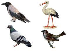 Bird, Animals, Animais, Animales, Animaux, Animal, Birds