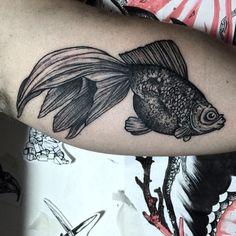 #Black #goldfish #fish #arm #inside  #black #tattoo #ink #blackworker #gael_cleinow #hand_job_tattoo @toe_loop_tattoo_berlin #BLXCKINK #blackworkersubmission #blacktattooart #btattooing #onlyblackart #BLACKTATTOOMAG