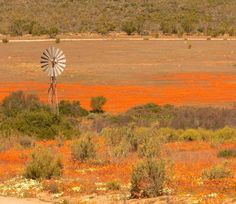 Most Beautiful Places Of The World – Namaqualand - South Africa Beautiful Sites, Beautiful Places In The World, Most Beautiful, Beautiful Scenery, Spring Flowering Bulbs, Kwazulu Natal, Of Wallpaper, Amazing Nature, Continents