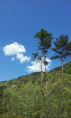 Pine tree & sky