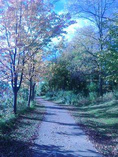Fall. Delaware Park, Buffalo NY