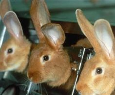 This Video sickens me!!  Please let Avon, Estée Lauder, and Mary Kay know that you won't buy their products until they are 100 percent cruelty-free once again.  Open your eyes and watch the video, no matter how hard it is to watch.  PETA is not radical when it comes to animal testing...how can YOU justify it?