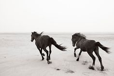 Chasing Wild Horses in Canada