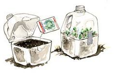 Milk Jug Seed Starters: This simple technique was developed for seeds that need to spend a winter outside before they will germinate but its also a great method to start garden seeds in late winter if you dont have indoor lights or a cold frame. Organic Gardening, Gardening Tips, Vegetable Gardening, Cold Frame Gardening, Planting Vegetables, Potager Bio, Garden Seeds, Planting Seeds, Edible Garden