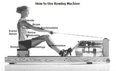The is usually considered by most people as one of the best machines in a fitness club. However, most individuals do not know how to use a rowing machine and therefore, they are unable to reap the benefits it carries along when working out with it. Indoor Rowing, Rowing Machines, Biceps And Triceps, Being Used, Need To Know, Exercise, Gym, Club, Workout
