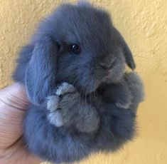 Super Fluffy Floofs Fluffy Animals You are in the right place about Cutest Baby Animals ever Here we Baby Animals Super Cute, Cute Baby Bunnies, Cute Little Animals, Cute Funny Animals, Cute Babies, Cute Pets, Cutest Bunnies, Cutest Animals, Small Animals Pets