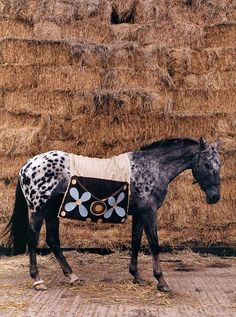 Tom Mannion, Horse by a haystack