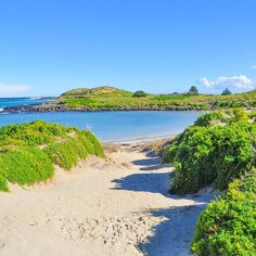 Günaydın keşfetsek diyerek başlayalım yeni güne.  Griffiths Island Port Fairy Avustralya #QatarAirways #Keşfetsek #Travel #PortFairy #Australia #VisitMelbourne by kesfetsek http://ift.tt/1UokfWI