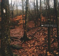 fallen leaves, pumpkin pies and cozy weather