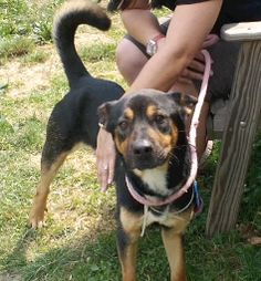 Bandit has been at the Cuyahoga County Animal Shelter for over 3 months!
