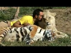 ✺ Kevin Richardson - Part 3 of 3 - The Lion Ranger - Death in the Kingdom - Doku English - YouTube