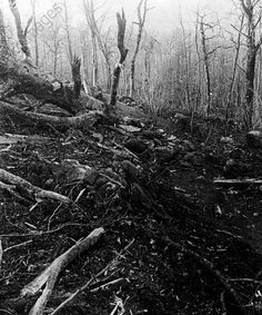 WWI, 1915, Battle of Eparges, fallen soldiers in a patch of woodland. -AKG Images